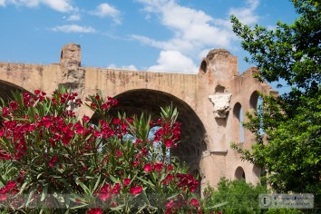 Flowers and the Basilica of Maxentius