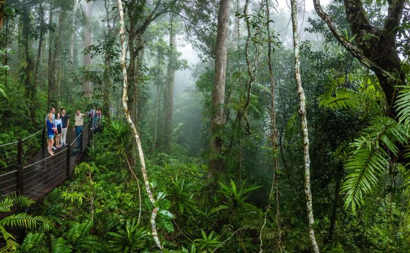Tourists visit an Australian rainforest.