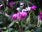 orchids so delicate
