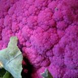139610-bloemkool-violetto-di-sicilia-di-sicilia-violetto