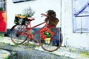 Fiets met bloemen nu in Werk aan de Muur
