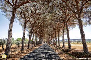 Parco-naturale-della-Maremma-Grosseto