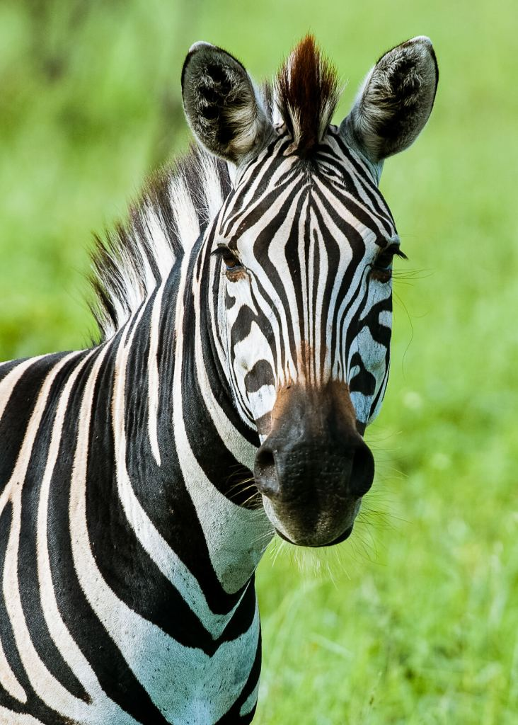 Fotoreis Kenia