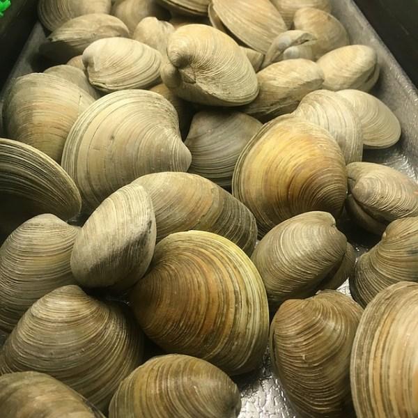 clams-1099568_640