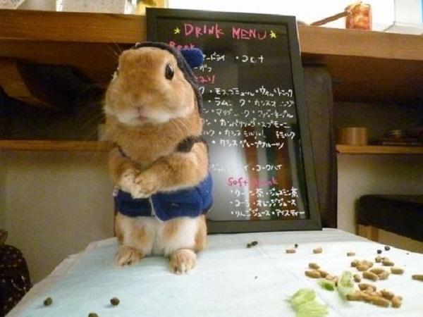 Cute Animal Café in Tokyo