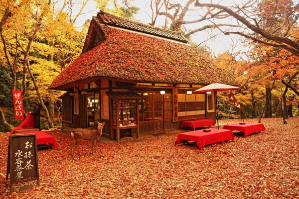 Japanese Teahouse vol.1 ~How to enjoy Japan~