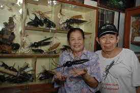 チェンマイ昆虫博物館