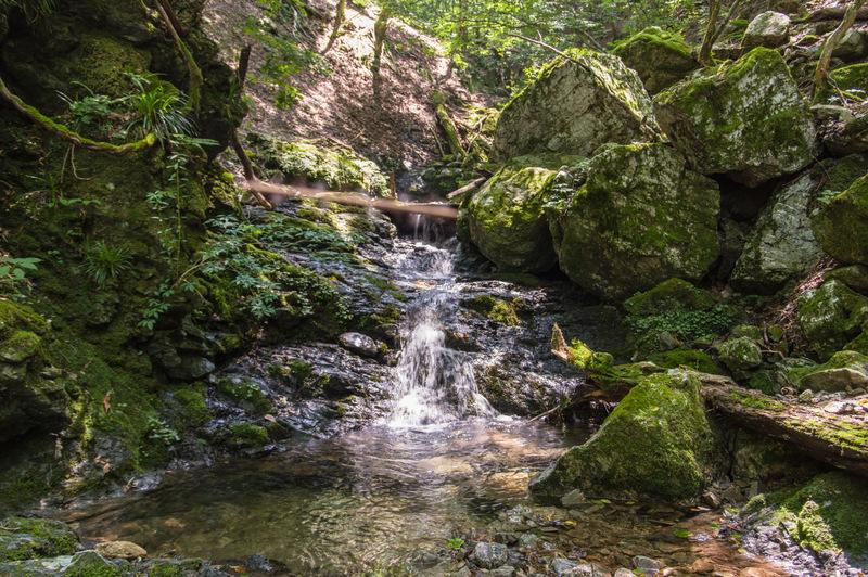 地蔵谷(三重県/台高山脈)