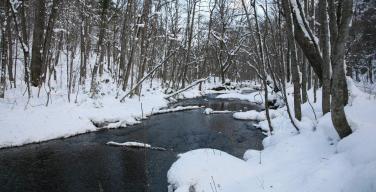 冬の奥入瀬渓流