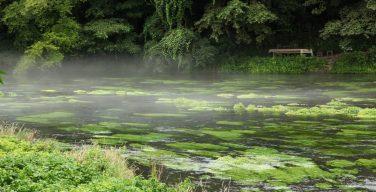 柿田川湧水