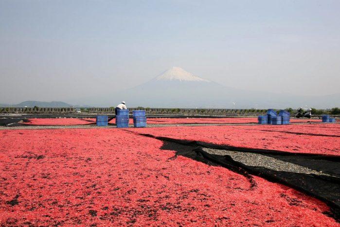 桜色の風景を探して