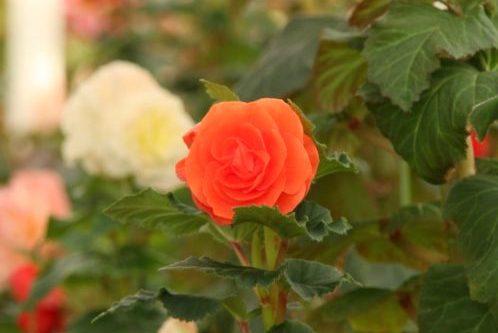 furukawa gardens