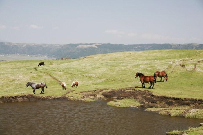 馬のいる風景