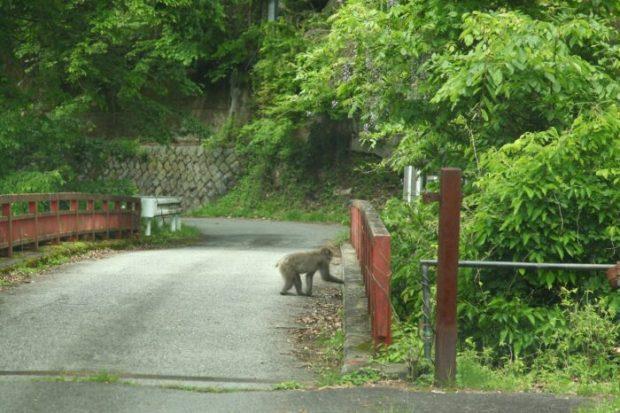 大嶽山那賀都神社麓の猿