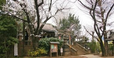 谷根千界隈の穴場お花見スポット 諏方神社