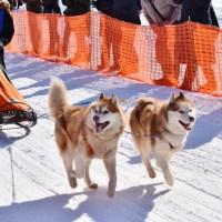 【動画】北海道恵庭市えこりん村の冬。犬ぞり大会。迫力の6頭犬ぞり。2月