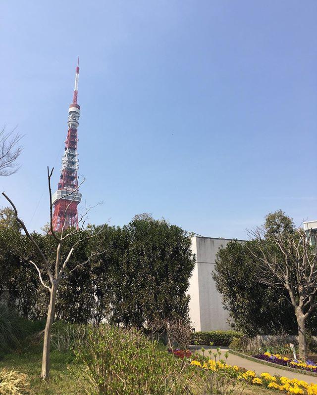 東京タワー芝公園からTokyo Tower Shiba Park#japan #tokyo #park #tokyotower - from Instagram