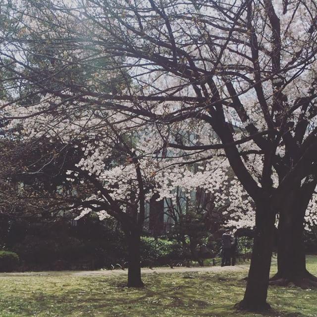 清澄庭園の桜 Sakura Kiyosumiteien #japan #cherryblossom #spring #sakura #tokyo #japan - from Instagram