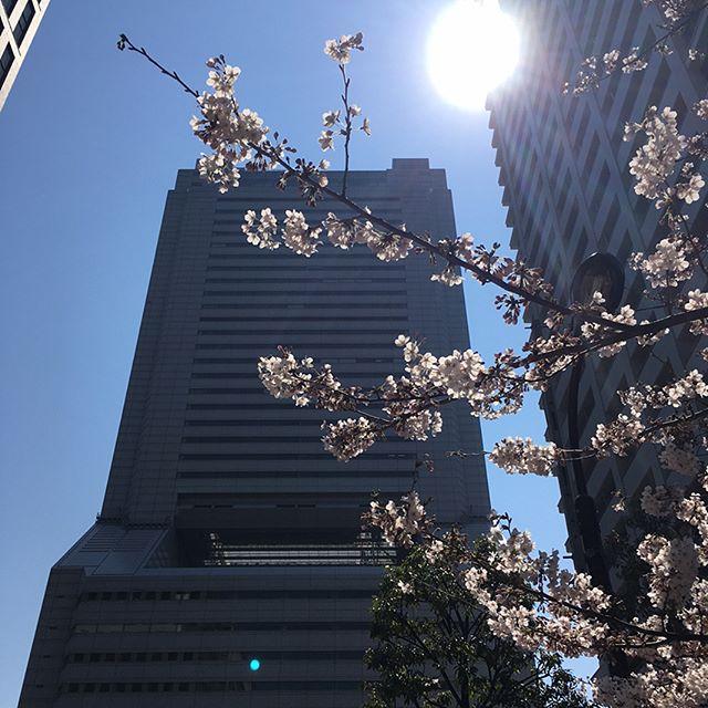 桜 さくら Sakura #japan #tokyo #tokyotower #sakura #spring - from Instagram