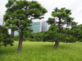 Haharikyu v Tokiu.