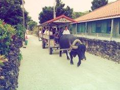 Takole vozijo turiste po vasi...