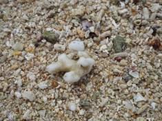 Tu vmes se skriva zvezdasti pesek. :)