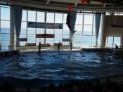 Šov z delfini.