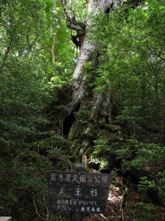 Yakushima Island National Park, World Natural Heritage in Japan 世界自然遺産 屋久島