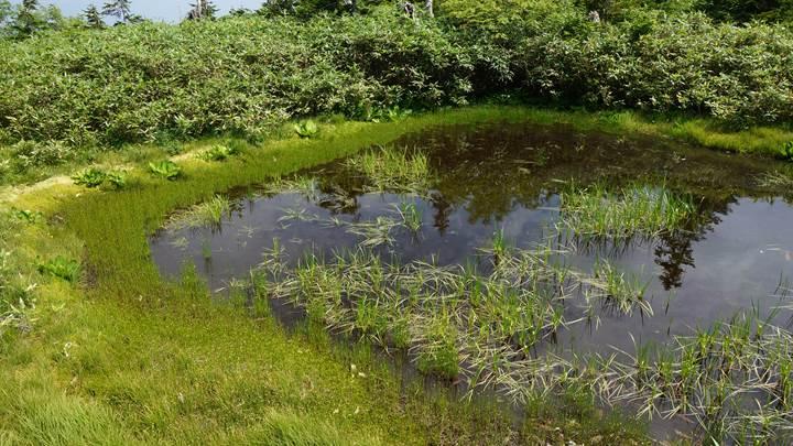 Tsugaike Natural Park 栂池自然園