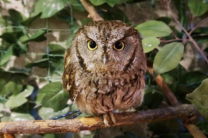 HARAJUKU OWL'S FOREST 原宿乃フクロウの森
