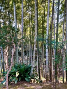 東京の穴場スポット 隠れた竹林 等々力渓谷