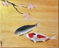 日本画 錦鯉と桜