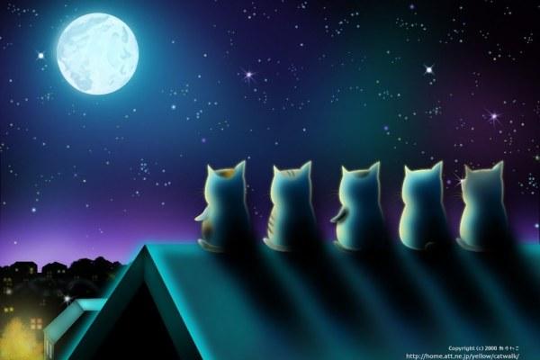 Cats & Heart Shaped Glasses. Enough Said.