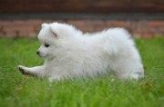 Что нужно купить для щенка: список