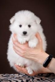 puppy-girl