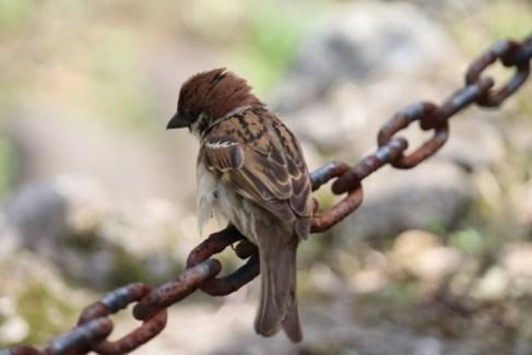 鎖の上の鳥