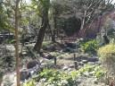 Ce beau petit jardin est en plein cœur du zoo de Ueno