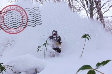 Niseko United feature