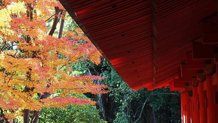 03_japan_forest