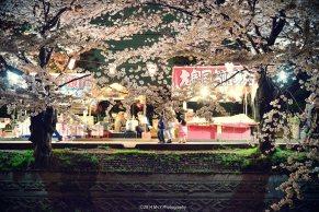 夜桜祭り。by makoto yoneda