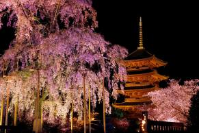 春の古都。by kyohei matsuda