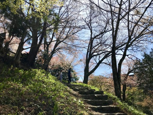 Mt. Yoshino Cherry blossoms