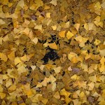 A little bit of nature, a little bit of urban: shooting Hibiya Park & Ginza on an autumn day