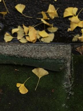 AG-autumn2017-small_9339373
