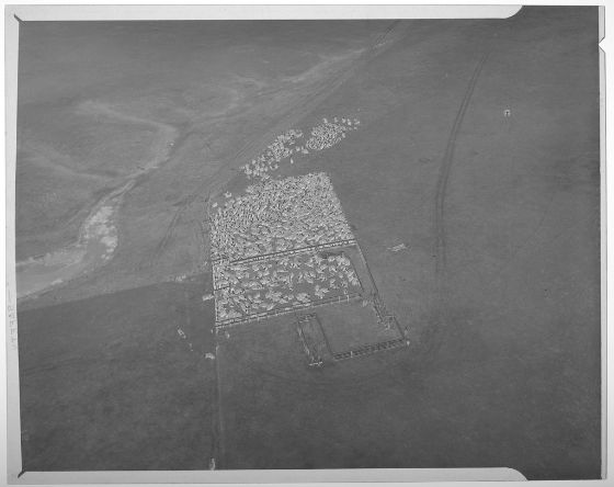 Cattle ranches aren't really a common theme in Japanese art, so I can't really imagine what one would have looked like. However, I found this 1950's aerial shot from Oregon in the 1950's and I wonder if an ancient Japanese cattle ranch would have looked a little like this....