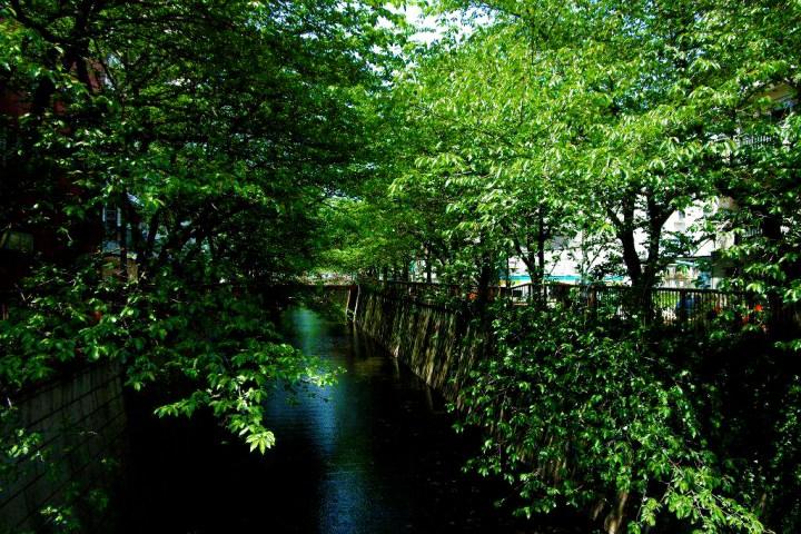 The Meguro River.