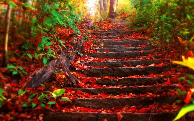 Aki - Autumn/Fall; Ha - Leaves; Hara - source/field