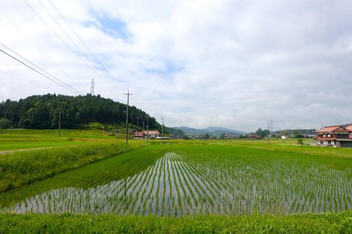 narimasu rice