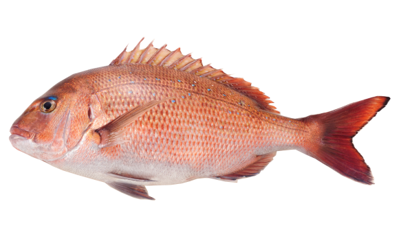 Red Snapper (Tai)