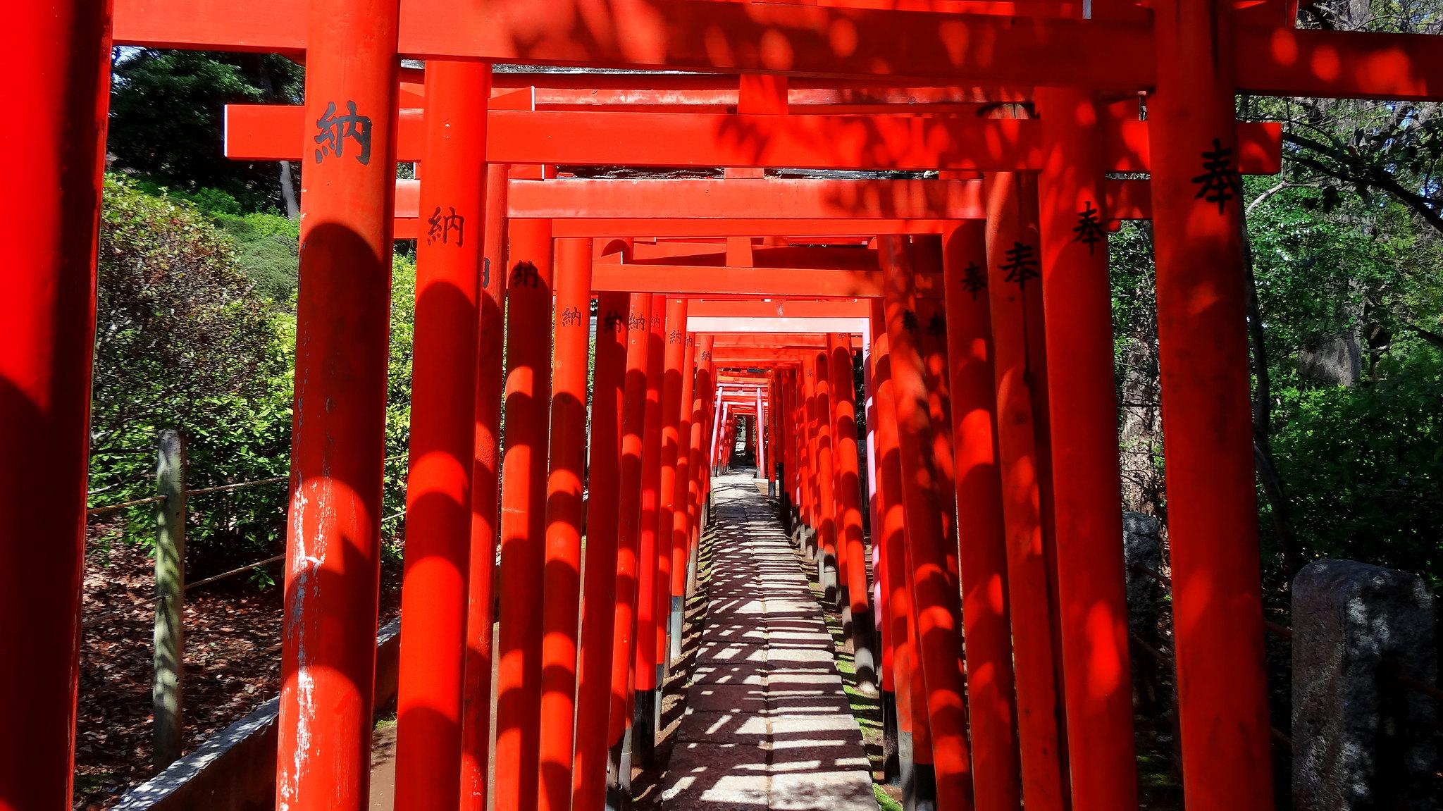 japanese history tour torii